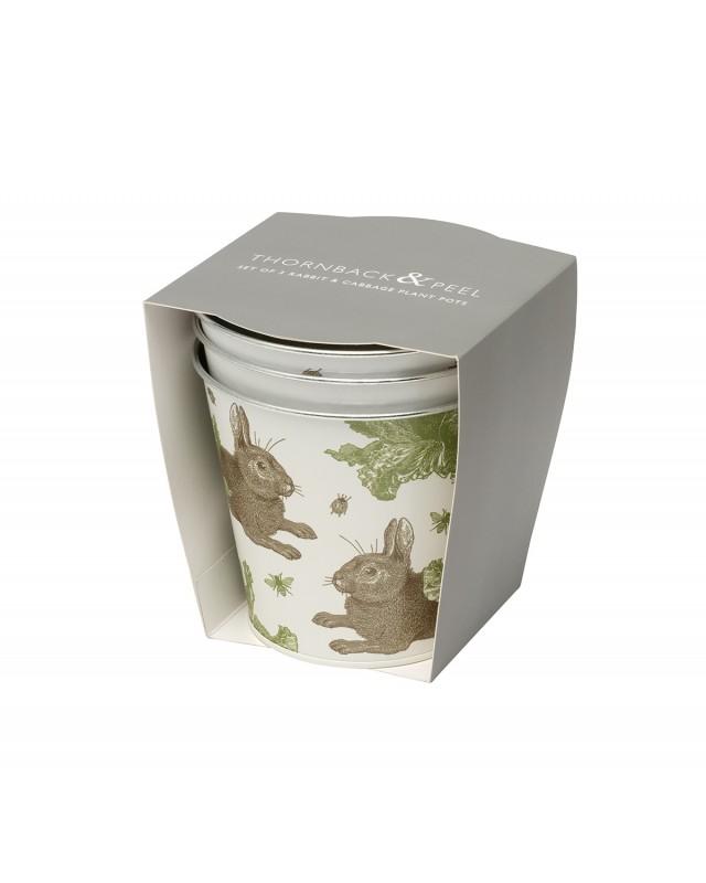 Thornback & Peel Rabbit & Cabbage plant pots set of 3